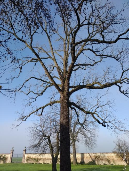 Racconigi, alberi secolari nel giardino