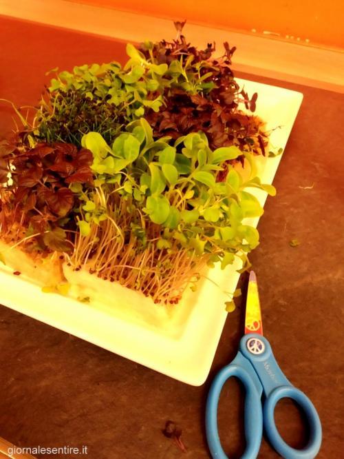 Attenzione anche ai dettagli: il vassoio di semi germogli per gli amanti della colazione bio è indice di grande qualità. Forbice inclusa per tagliarseli freschissimi