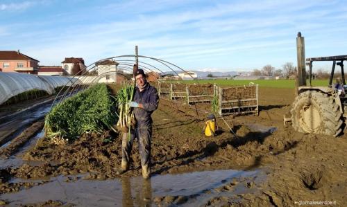 Giacomo Traversa  ha dovuto fare la raccolta dopo forti pioggie lottando contro il fango