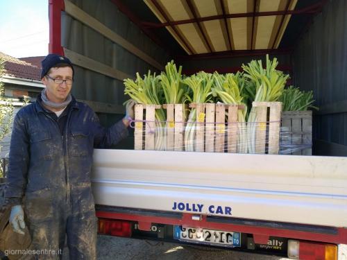 Giacomo Traversa pronto per la consegna ai mercati generali