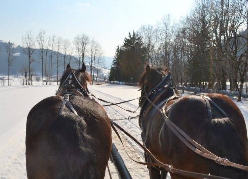 Esperienza indimenticabile: passeggiata a cavallo sulla neve