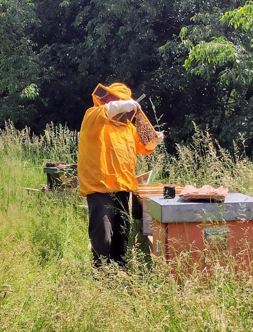 Un'arte antica: fare il miele