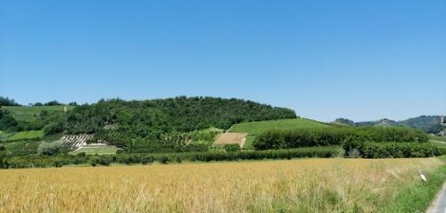 La varietà dell'ecosistema si nota nelle colture: grano, vite, castagni, noccioleti: un paradiso