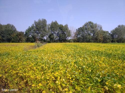 Campi coltivati a soia bio di alta qualità (le foto di questa pagina sono di Corona Perer)