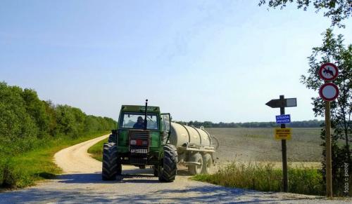 I campi hanno pendenze che agevolano la raccolta e canalizzazione dell'acqua