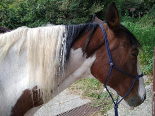 Ringo è il cavallo di Silvia