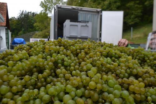 le uve bianche danno l'ottimo Vino del Vescovo, il Vino dello Schloss Seggau, il castello-residenza vescovile che ha dato da lavorare per secoli alla gente del luogo.