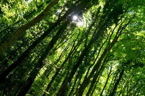 L'inserimento delle faggete vetuste della Foresta Umbra nel Patrimonio dell'umanità è stata decretato a Cracovia