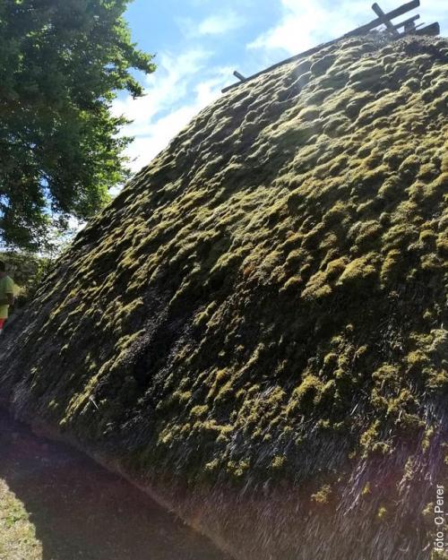 Il tetto erboso della capanna abitazione dei Reti