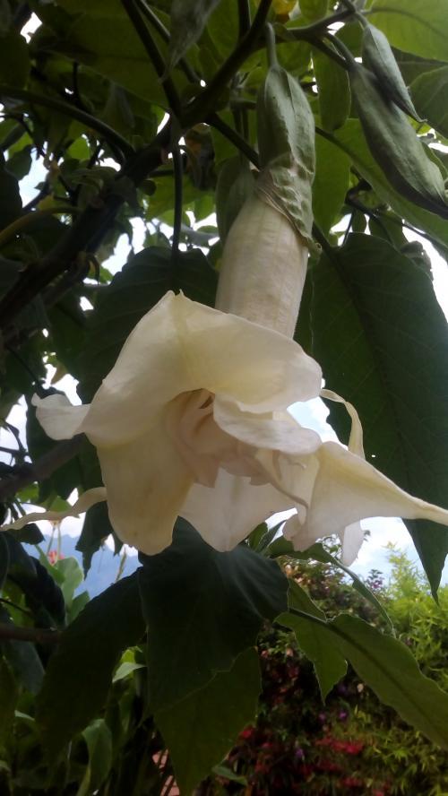 Fiore bellissimo ma...puzzolente