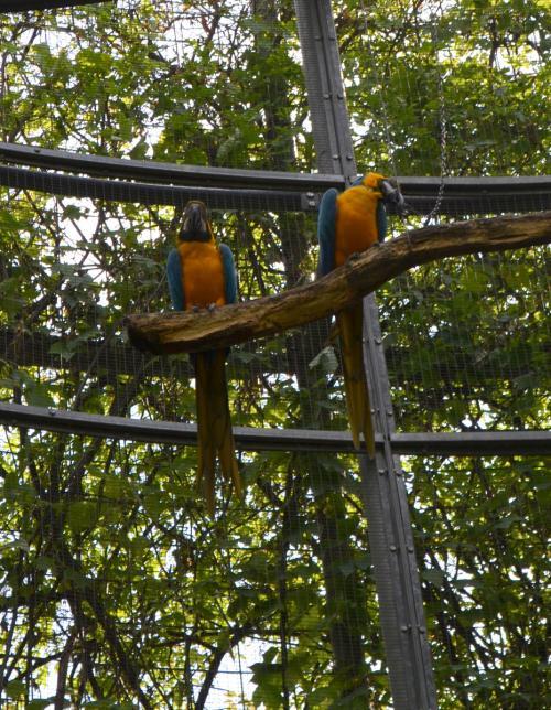 Da vedere la sezioni animali: i pappagalli