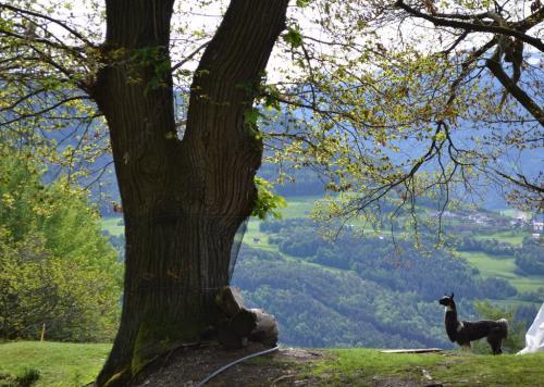 Passeggiata sulle colline di Brixen