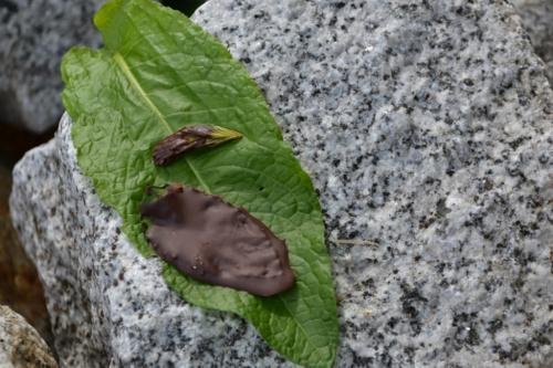 una foglia di menta ricoperta di cioccolato: squisito dessert