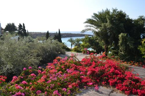 Lussureggiante e clima ottimale: Cipro è bella tutto l'anno