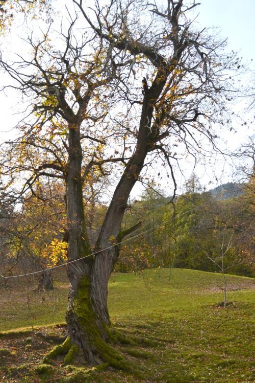 il sentiero del castagno a Lana, località Fojana