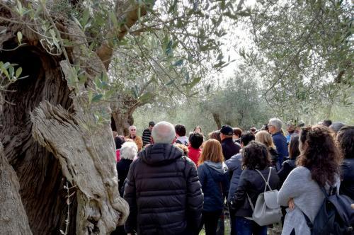 Sono 124 le Città dell'olio che in tutta Italia hanno partecipato alla terza edizione della Camminata tra gli olivi