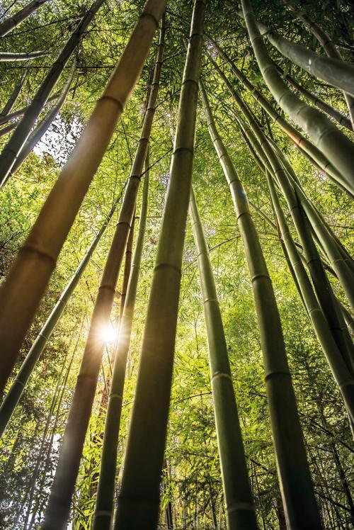 il Bosco di Bambù, qui ascoltare il silenzio è pura magia