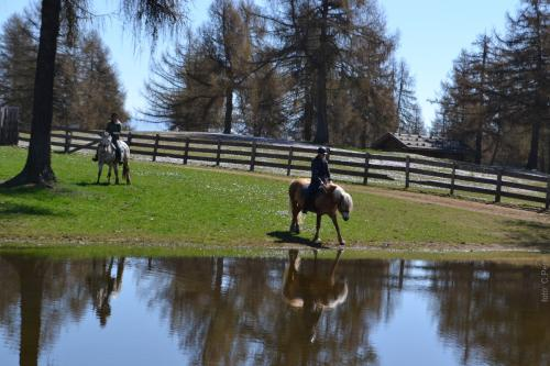 Altopiano del Salto, luogo ideale per l'equitazione e per il cavallo avelignese