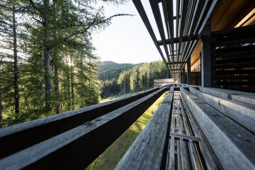 Legno e foreste