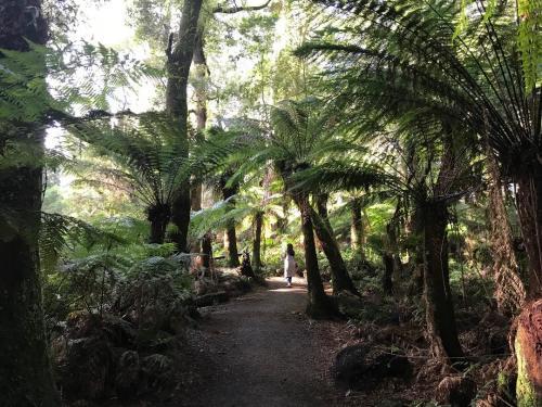Rainy Forest, una delle foreste pluviali piú belle del mondo