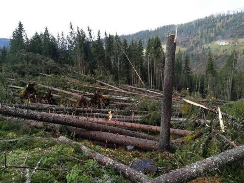 Vaia è stato il più pesante evento naturale che ha colpito le foreste del versante meridionale delle Alpi