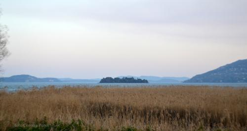 l'area umida protetta che si affaccia sul Lago Maggiore nei pressi di Pallanza (foto giornalesentire.it)