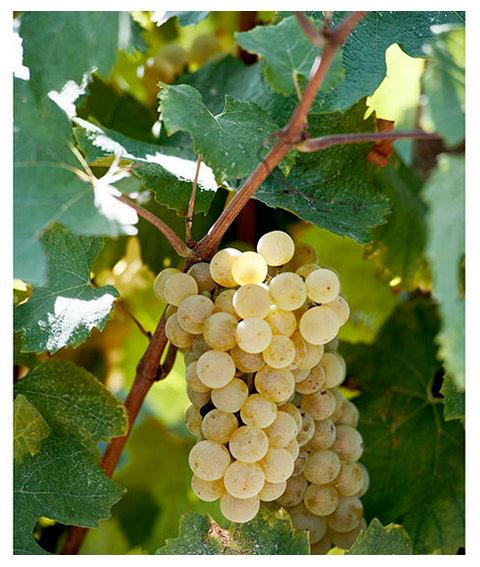 Il Collalto Wine Festival è un'occasione per scoprire il Prosecco